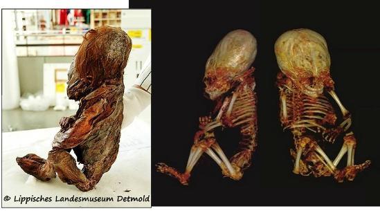 mummified alien skeleton